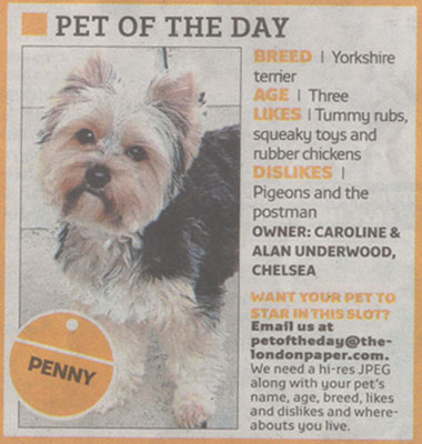 The London Paper pet of the day article