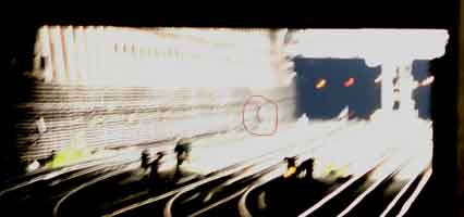 The trespasser is spotted from the platforms at Earls Court