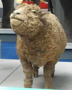 A silly looking stuffed sheep