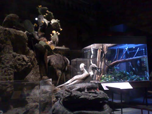 Inside the Darwin Big Idea exhibition