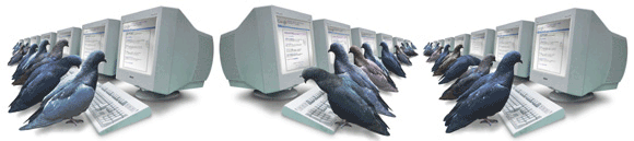 Pigeons hard at work ranking websites
