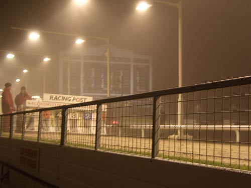 Greyhounds in the mist