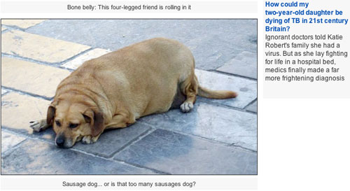 Stolen fat dog in the Daily Mail